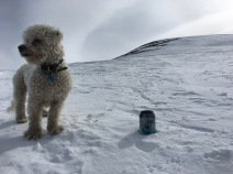 Augie and an Alaskan Brewing IPA