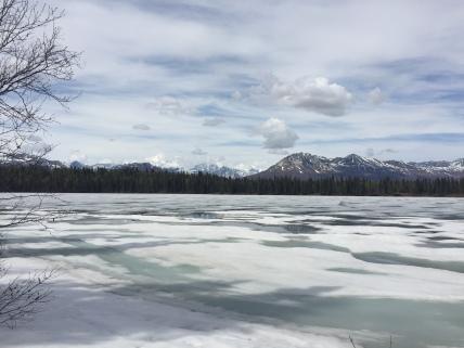 Denali Views