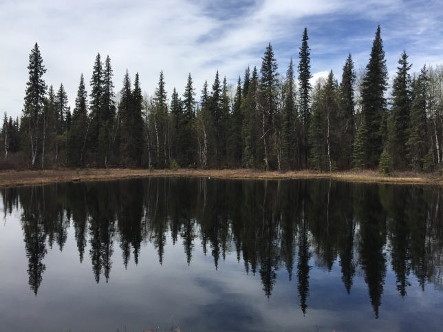 Byer's Lake Trail